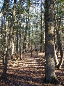 White Pines Trail