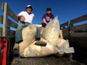 Megan and Don load the fleeces for the Wool Pool