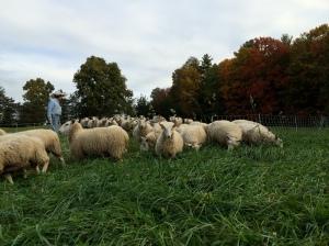 New Pasture