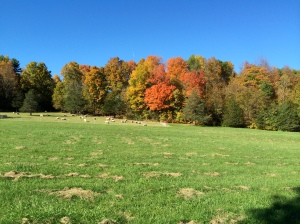 Autumn Color: the old sugarbush