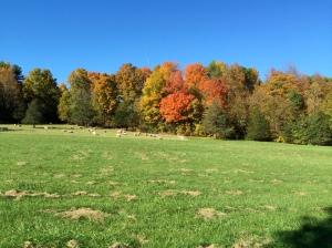 Autumn Color: the old sugarbush
